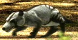 http://static.tvtropes.org/pmwiki/pub/images/247d65297793af3ac83c1723279a7a87.jpg