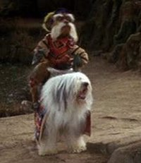 The Small Dogs On Labrynth