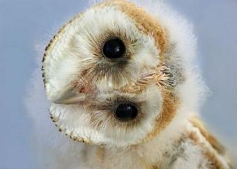 http://static.tvtropes.org/pmwiki/pub/images/508945-portrait-of-a-barn-owl-with-its-head-naturally-rotated-owls-have-the-ability-to-rotate-their-heads-i_5910.jpg