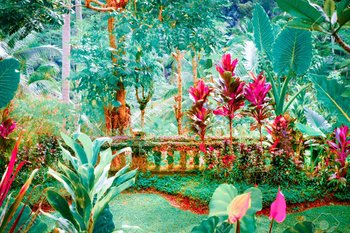 https://static.tvtropes.org/pmwiki/pub/images/97797390_surreal_colors_of_fantasy_tropical_garden_with_amazing_plants_and_flowers.jpg