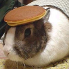 https://static.tvtropes.org/pmwiki/pub/images/Bunny_With_Pancake_On_Head1110_jpg_100.png