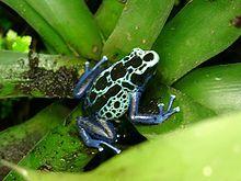 http://static.tvtropes.org/pmwiki/pub/images/Dart_frog_3460.jpg