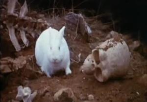 http://static.tvtropes.org/pmwiki/pub/images/MPTHG_rabbit_6064.jpg