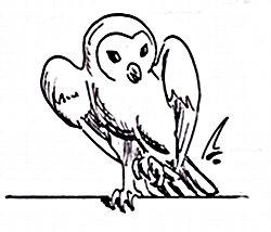 https://static.tvtropes.org/pmwiki/pub/images/Roommates-Hedwig_1381.jpg