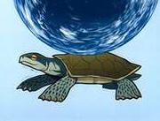 https://static.tvtropes.org/pmwiki/pub/images/Turtle2_7485.jpg
