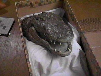 http://static.tvtropes.org/pmwiki/pub/images/alligator_head.jpg