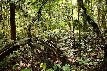 http://static.tvtropes.org/pmwiki/pub/images/amazon-rainforest-jungle_6545.jpg