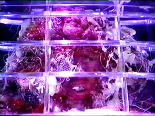 http://static.tvtropes.org/pmwiki/pub/images/arthur_stengos.jpg