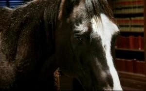 https://static.tvtropes.org/pmwiki/pub/images/bad-horse-300x188_4511.jpg