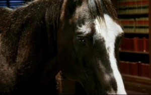 http://static.tvtropes.org/pmwiki/pub/images/bad-horse-300x188_4511.jpg