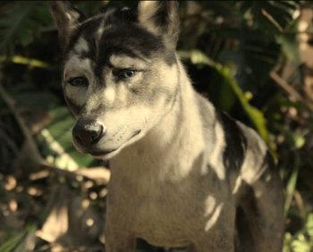 Mowgli / Characters - TV Tropes