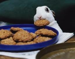 http://static.tvtropes.org/pmwiki/pub/images/bunnycookie_5719.jpg