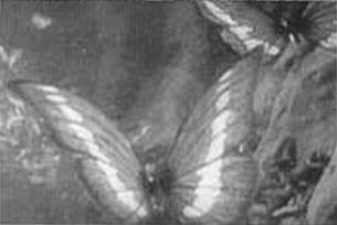 https://static.tvtropes.org/pmwiki/pub/images/butterfly_morpho_v.png