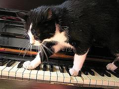 http://static.tvtropes.org/pmwiki/pub/images/catlike_tread.jpg