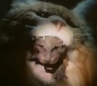 https://static.tvtropes.org/pmwiki/pub/images/catnipcoldturkey_3435.jpg