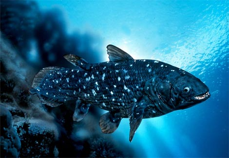 http://static.tvtropes.org/pmwiki/pub/images/coelacanth.jpg