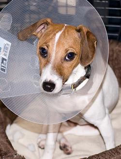 https://static.tvtropes.org/pmwiki/pub/images/coneofshame_3221.png