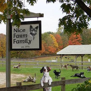https://static.tvtropes.org/pmwiki/pub/images/dog_got_send_to_the_farm.jpg