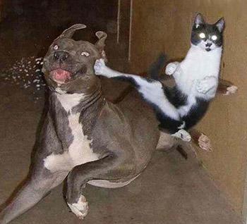 http://static.tvtropes.org/pmwiki/pub/images/dogcatfight1_4950.jpg