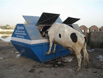 https://static.tvtropes.org/pmwiki/pub/images/dumpster-diving-cow_5756.jpg