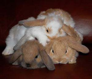 http://static.tvtropes.org/pmwiki/pub/images/everythings-better-with-bunnies_6823.jpg