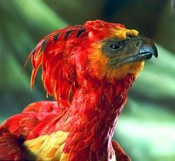 https://static.tvtropes.org/pmwiki/pub/images/fawkes_phoenix.jpg
