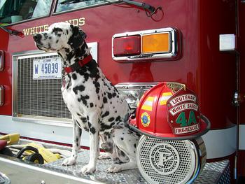https://static.tvtropes.org/pmwiki/pub/images/firehouse_dalmatian.jpg