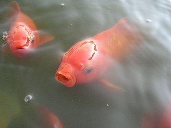 https://static.tvtropes.org/pmwiki/pub/images/fishboy.jpg