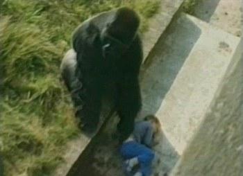 http://static.tvtropes.org/pmwiki/pub/images/gorillaprotect.jpg