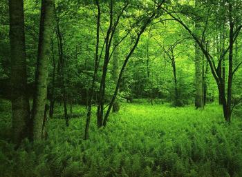 https://static.tvtropes.org/pmwiki/pub/images/green_forest_5324.jpg