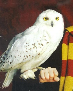 http://static.tvtropes.org/pmwiki/pub/images/harry-potter-hedwig_6032.jpg