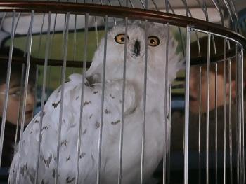 Image result for hedwig scared