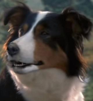 https://static.tvtropes.org/pmwiki/pub/images/jessie_dog.jpg