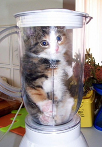http://static.tvtropes.org/pmwiki/pub/images/kitten_blender_2120.jpg