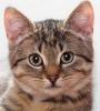 https://static.tvtropes.org/pmwiki/pub/images/kitty2009_jpg_100.png