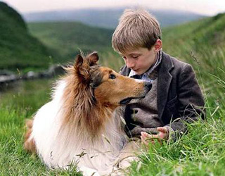 A review of the 2005 film lassie