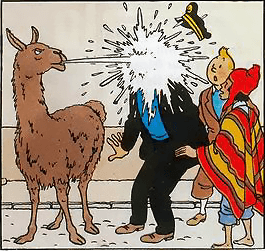 albino black sheep llama song