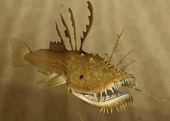 https://static.tvtropes.org/pmwiki/pub/images/lurkfish_1.jpg