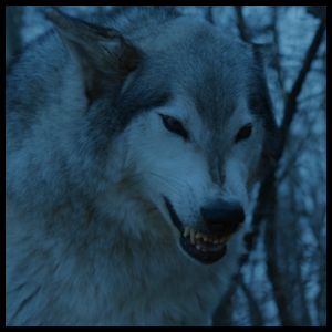 https://static.tvtropes.org/pmwiki/pub/images/nymeria_s7.png