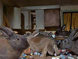 http://static.tvtropes.org/pmwiki/pub/images/pet_store_bunnies.jpg