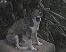 https://static.tvtropes.org/pmwiki/pub/images/pilot157_4911.jpg