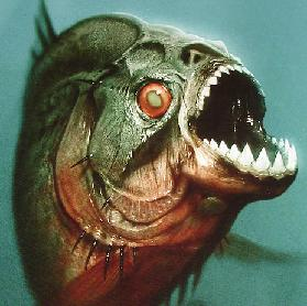 Image result for piranha