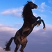 http://static.tvtropes.org/pmwiki/pub/images/rsz_black-stallion-rearing_7611.jpg