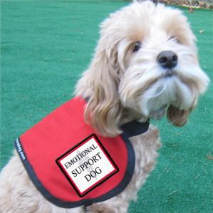 https://static.tvtropes.org/pmwiki/pub/images/rsz_emotional_support_dog.png