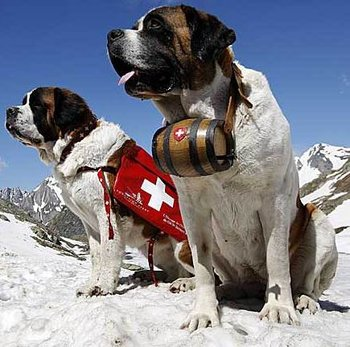 Mountain Rescue Dog Keg Collar
