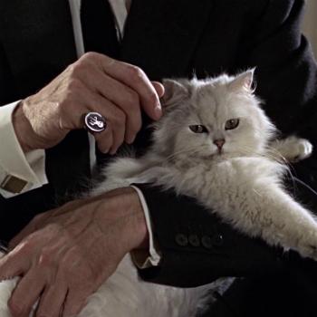 http://static.tvtropes.org/pmwiki/pub/images/s_cat_1_8484.jpg