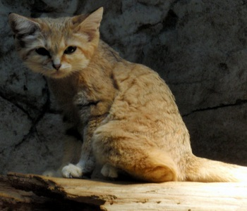 Of my own suggestions the last of the sand cat ones is my favourite