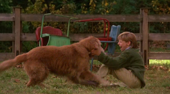 http://static.tvtropes.org/pmwiki/pub/images/shadow_and_peter_homeward_bound.jpg