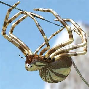https://static.tvtropes.org/pmwiki/pub/images/silver_spider.png