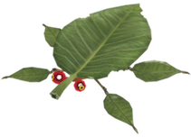 https://static.tvtropes.org/pmwiki/pub/images/skitter_leaf.png